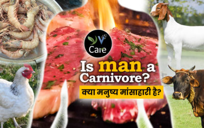 Is Man a Carnivore?