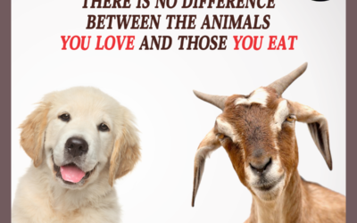 What is Speciesism and how can we stop it?